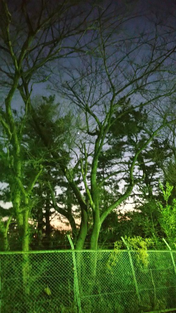 Xperia Aceで撮影した幻想的な樹木
